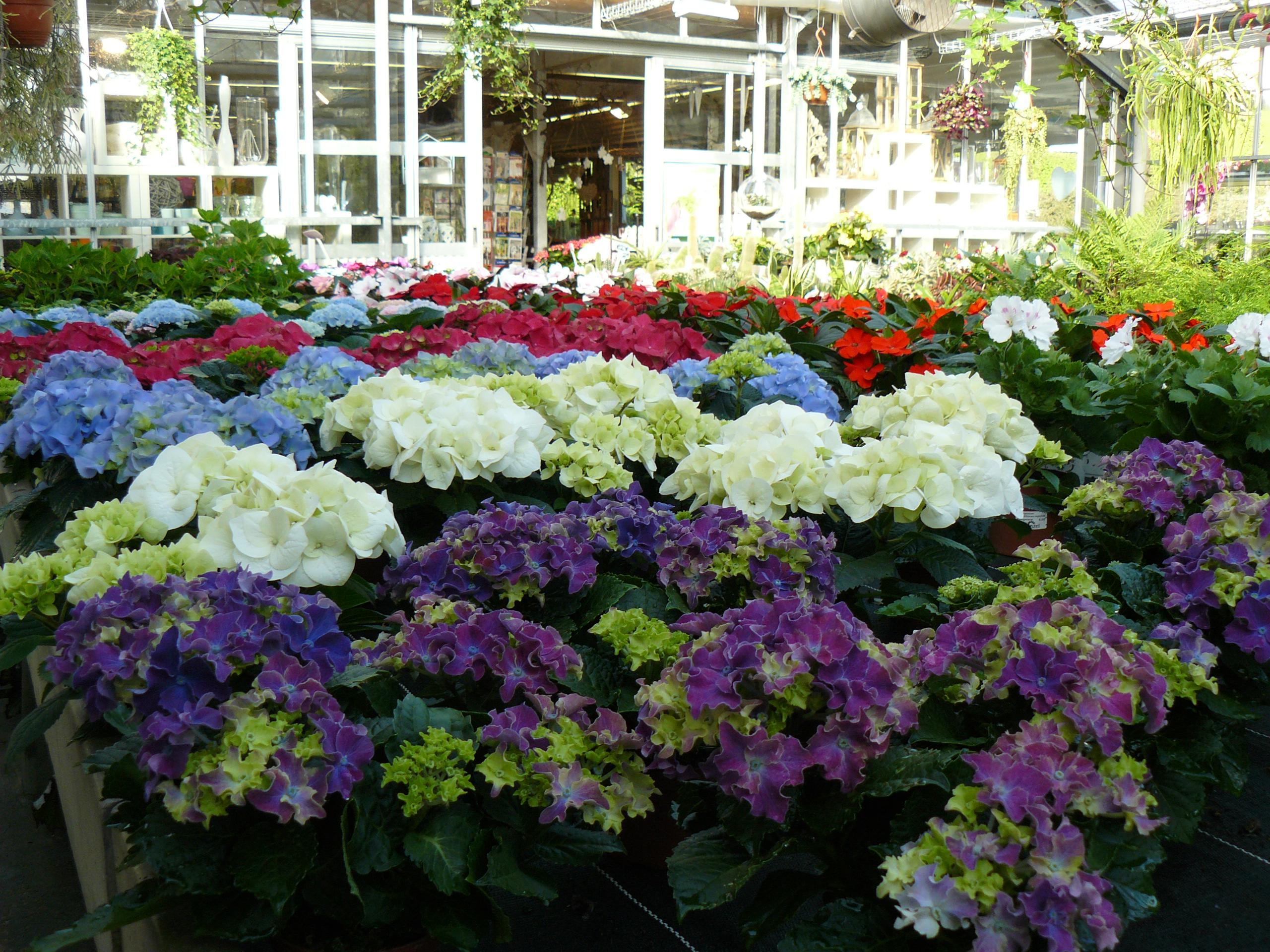 Blumen von Frenzel Gärtnerei & Blumenhaus, wir liefern noch heute zu Ihnen. Fleurop Angebote